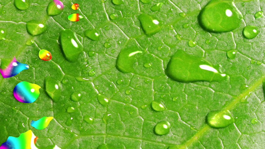 Rainbow Reflected In Droplets On The Green Leaf | Shutterstock HD Video #29400097