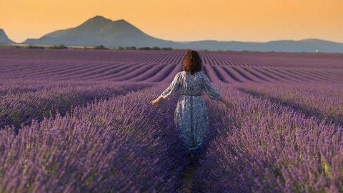 Woman in summer dress walks through the field of lavender.  Provence, France