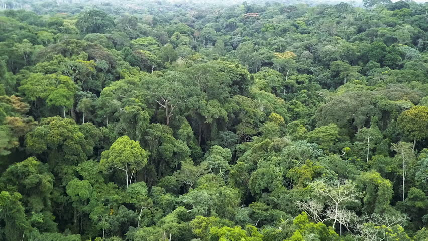 Africa rain-forest aerial view