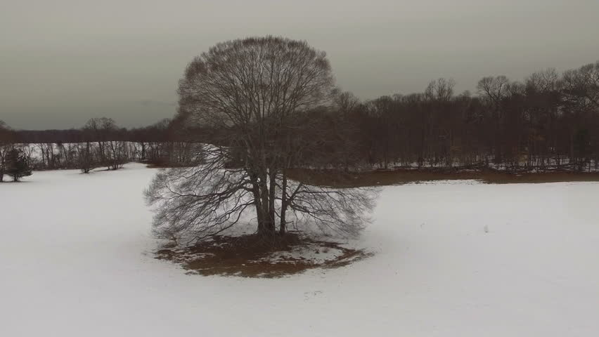 Header of American beech