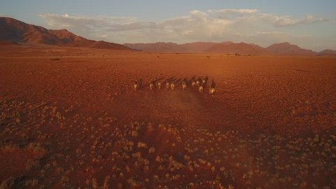 A herd of zebras are making their way through a red stone desert - NamibRand Nature Reserve - Windhoek, Namibia