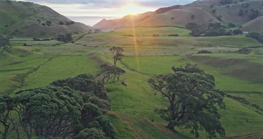 Aerial flying over farmland and pohutukawa trees at sunset, Awhitu Peninsula, Auckland, New zealand