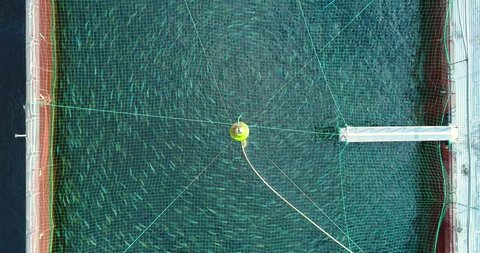 AERIAL. Open water salmon fish farm in fjord. Norway.