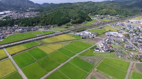 Aerial view of Japanese rice field, drone shot