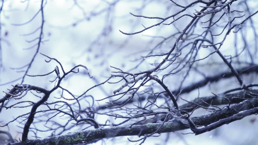 Icy Branch and Snow Falling