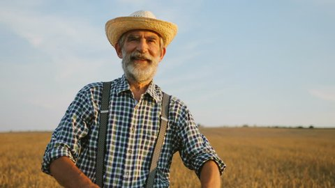 Portrait of senior man with crossing hands in the hat and casual shirt in the golden field background.