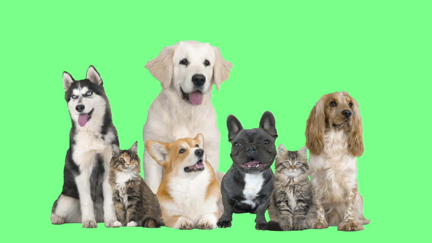 Dogs and cats on a green screen