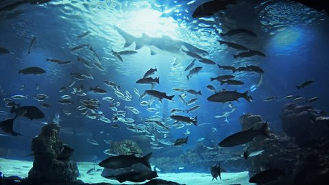 Beautiful fish oceanarium, deep underwater world panoramic view, different water animal species swimming in large Barcelona aquarium, sea scene view with natural light rays, shining through the water.