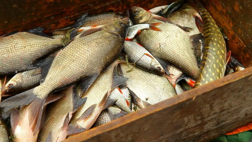 Живой карп и другая рыба оптом в москве и московской области.