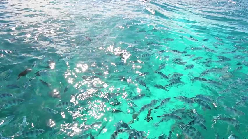 Lots of small fish in amazingly  turquoise sea water in Mauritius.  #30074917