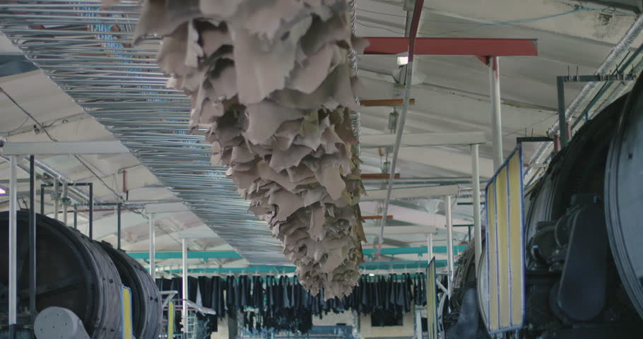 Factory of leather production. Skin Drying Conveyor