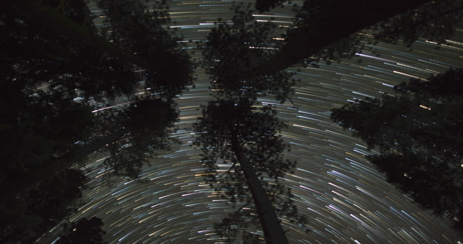 Night Sky Above Treetops. A Panoramic Time Lapse of the Night Sky above the Giant Pine treetops in McCloud, California. Rendered with Star Trails.