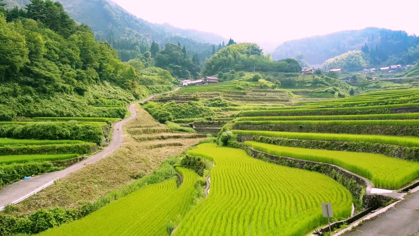 Aerial  movie with rice terraces   Shutterstock HD Video #30207262