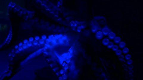 Octopus tentacles moving in dark inky neon water.