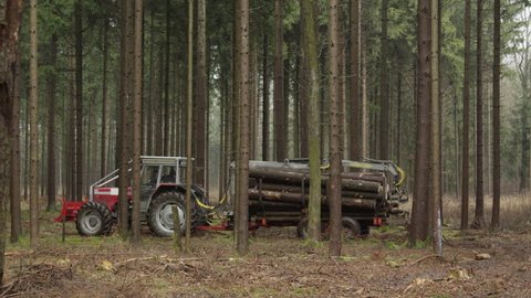 CLOSE UP, DOF: Transporting stack of cut, delimbed and felled tree trunks loaded on logging trailer from the woods. Laborer driving collected logs to the road to be lifted on trucks for transportation