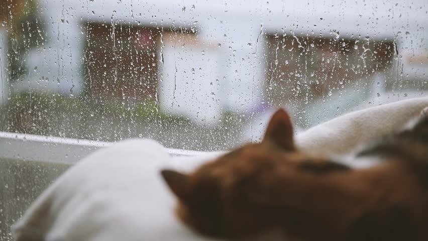 Картинки по запросу дождь и снег кот