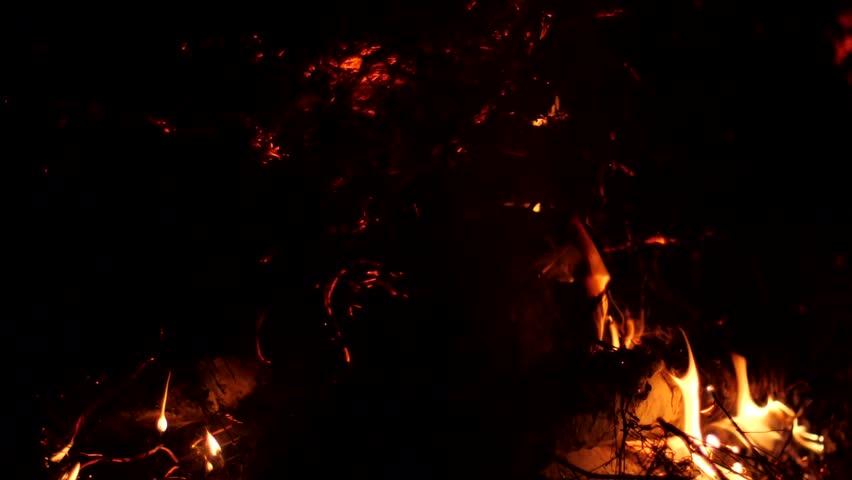 Beautiful Forest Fire Flames | Shutterstock HD Video #30896647