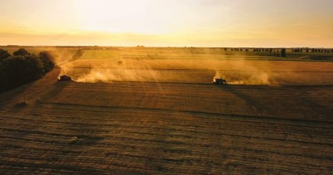 Combine harvesters in sunlight at sunset. Harvesting wheat on the golden field. Aerial view. Beautiful agriculture scene with agricultural machinery in the countryside. Combines are surrounded by dust