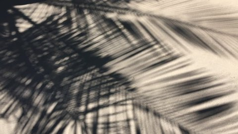Shadows of palm tree fronds fluttering on textured sand beach
