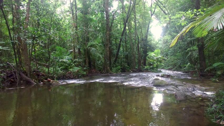 Lush Wilderness River In Orego...