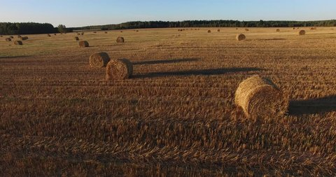 4K high quality aerial footage of wide open field after autumn grass harvest with dry grass bundles scattered near Pereslavl-Zalesskiy on sunny afternoon, Golden Ring route 140 km from Moscow, Russia