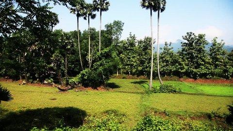 Tracking shot of agricultural fields in Araku Valley, Visakhapatnam, Andhra Pradesh, India