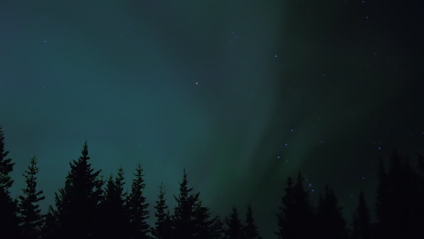 The constellation Orion the Hunter rises over the treetop silhouettes of an Alaskan spruce forest as Aurora Borealis curtains flicker and shimmer across the night sky.