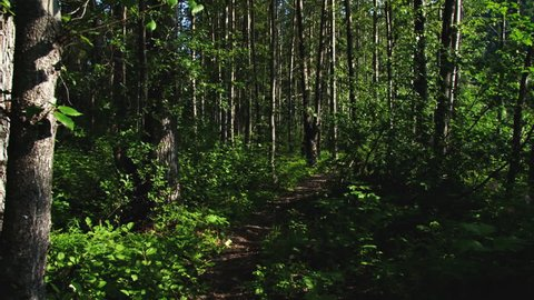 Walking through Forest Path by River in Alaska