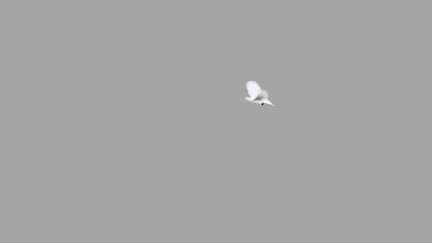 Doves. Chromakeyed on black (add mode) and grey (blend mode) for quick compositing with matte. Motion shot on green screen. | Shutterstock HD Video #3129772