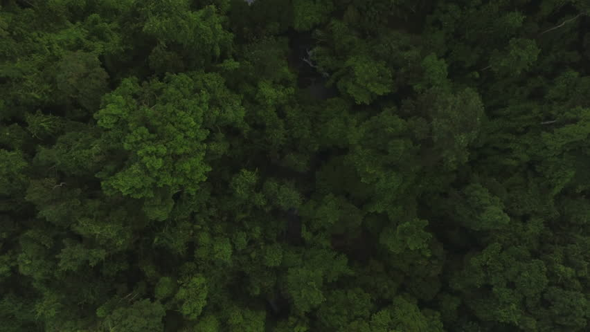 Aerial shot of a stream in tropical forest | Shutterstock HD Video #31504687