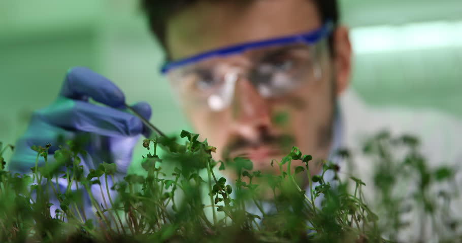 Busy Biologist Man Working on Modified Plants Seedlings Close Up in Laboratory #31579837