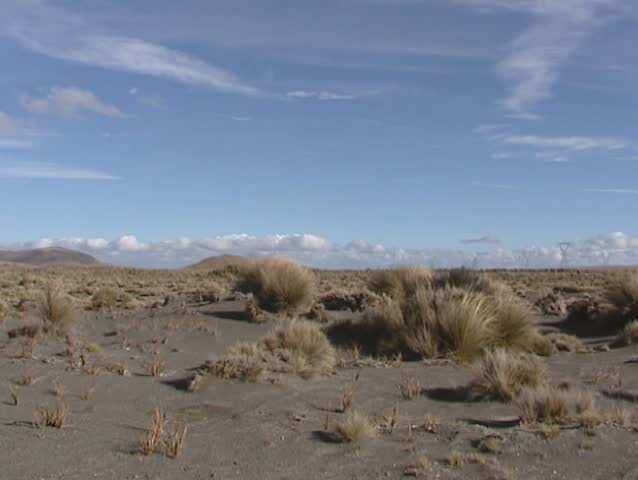 Rangipo desert pan tussock grass & bushes. Rangipo Desert is located in New Zealand, on the North Island Volcanic Plateau.