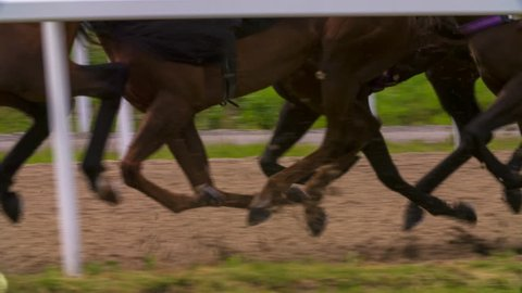 Race Horses moving in synchronicity in slow motion.