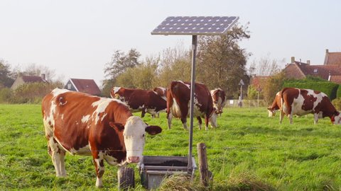 cow drinking water from solar powered pump fed