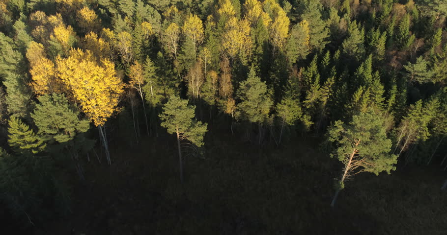 Aerial shot of colorful forest in autumn | Shutterstock HD Video #31926367