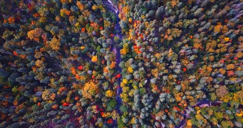 Great top aerial view of autumn forest and stream running among trees. Sikhote-Alin Nature biosphere Reserve in Russia for endangered Siberian tiger founded in 1935.