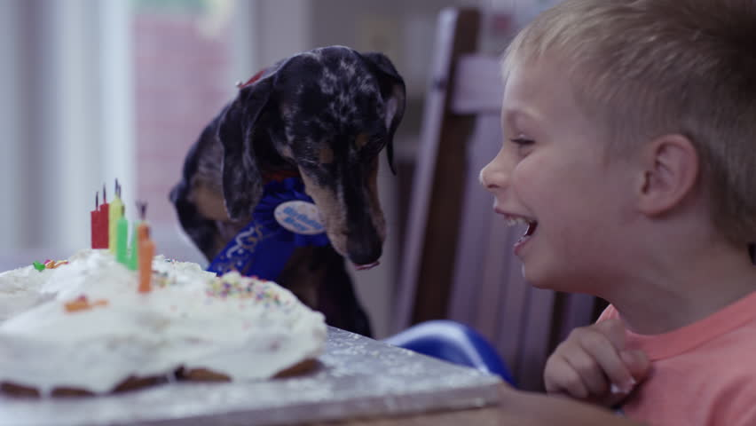 Boy And Dog Birthday Party Stock Footage Video 100 Royalty Free 32151817