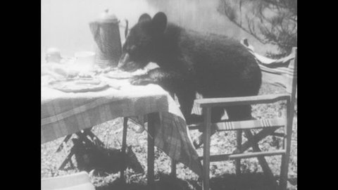 1950s: Black bear cub eats food from picnic table then knocks things off table and runs away. Boy and girl find bear cubs eating food at picnic table. Boy points at bears. Bears run into lake.