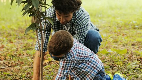 Closeup. Portrait of a little boy and his dad planting a tree. The boy kneels by the tree. They press the soil with their hands. Blurred background