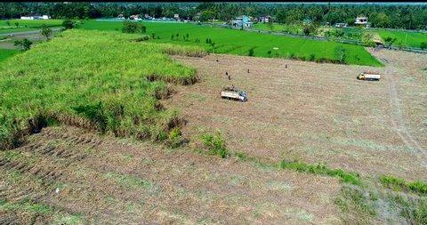 AERIAL: Sugar cane plantation near Jogjakarta, Indonesia.