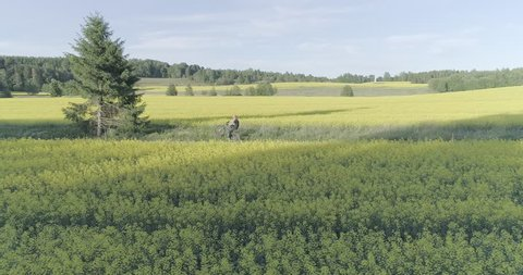An aerial view of people driving mountain bikes in a road through a blossoming turnip mustard field.