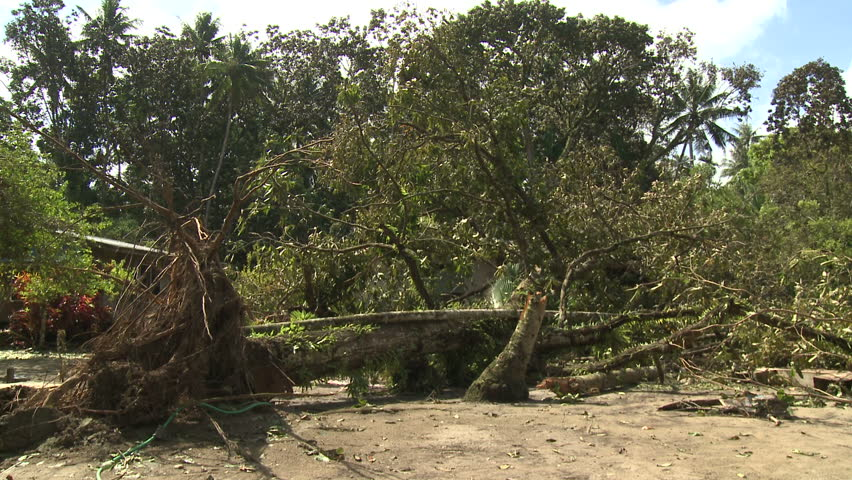 Hurricane Wind Damage To Large Trees - Shot in full HD 1920x1080 30p on Sony EX1 XDCAM.