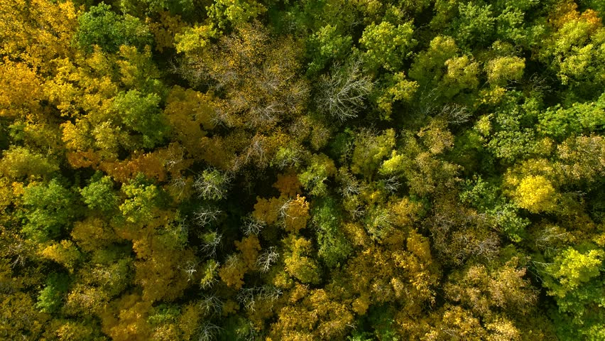 Autumn forest aerial photography. A drone flies over a forest and a mountain on a sunny day at sunset