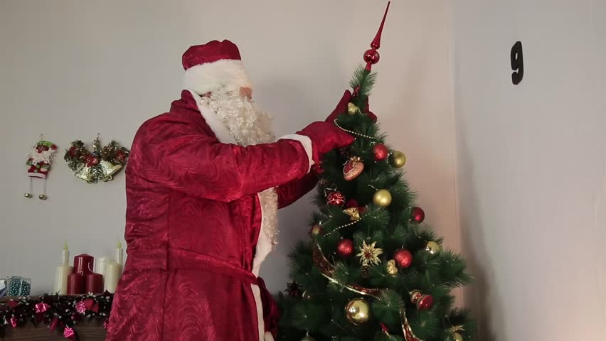 Santa Claus is decorating a Christmas tree. Santa Claus hanging toys, a garland on a Christmas tree before Christmas.