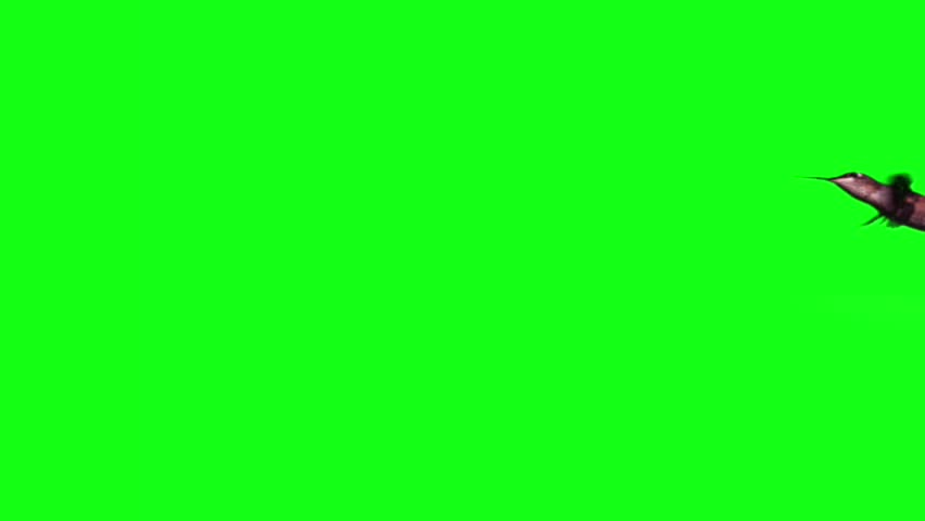 Hummingbird fly in slow motion on green screen | Shutterstock HD Video #3275177