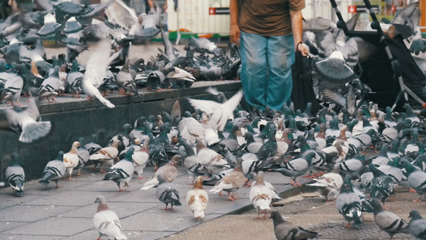 Old Woman feeding pigeons on the street. Slow Motion in 96 fps. Crowd of pigeons at the feet of a man on the sidewalk. Flock of pigeons eating bread outdoors in the city street. Pigeons in the park.