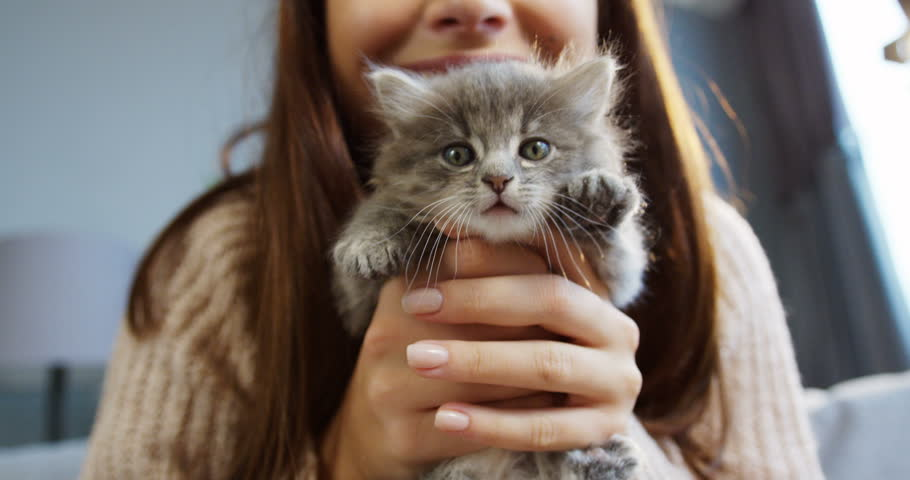 Close up of cute kitty in woman's hands waving its paws. Pretty woman holding a cat closely to the camera. Indoor