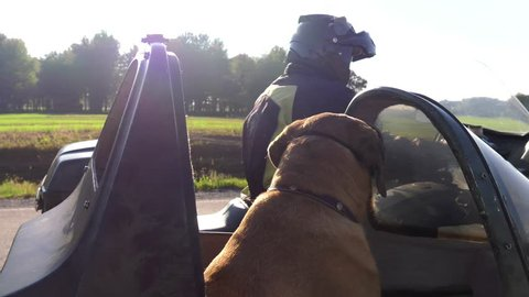 mastiff dog rides in motorcycle sidecar looks at owner and camera 4k cute and