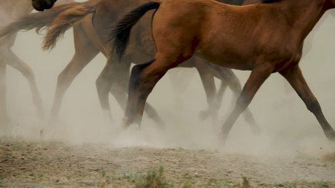herd in the steppe slow motion
