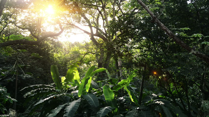 In green solar jungles of Central America